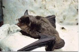Bat, Gray