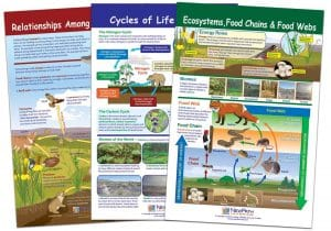 Learning Ecology Bulletin Board Chart Set