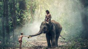 top environmental organizations in India