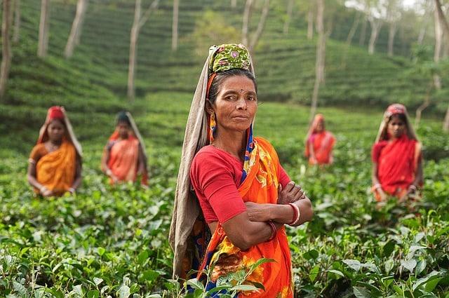 environmental organizations, India