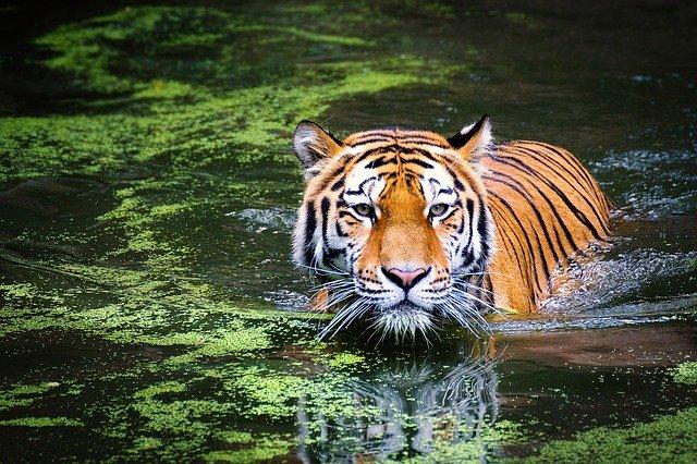 WildCats Conservation Alliance