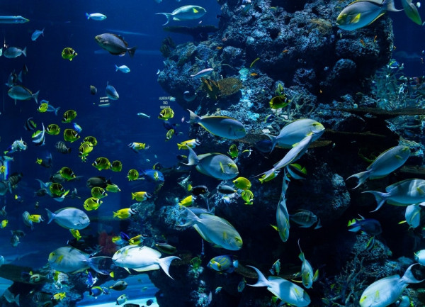 Why is Biodiversity Important To Ecosystems