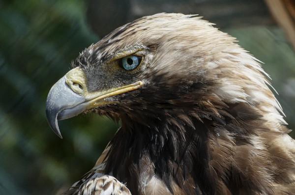 endangered species in oklahoma