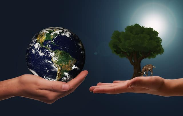 how to be an environmental activist