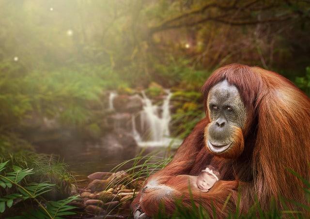 gorilla holding a child